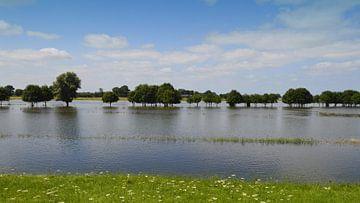 Rivier de IJssel, bomen onder water van Greta Lipman