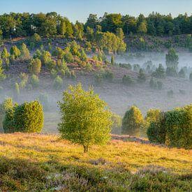 In de ochtend op de bodem van de Lüneburger Heide van Michael Valjak