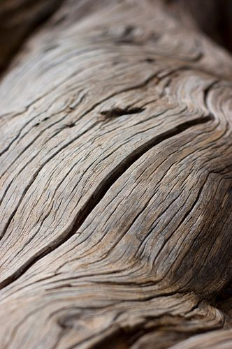 Versteend hout van