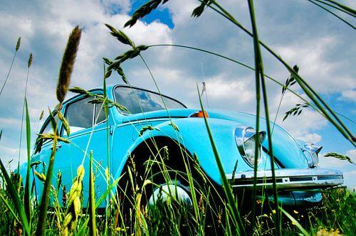 Een graskever von Harrie Muis