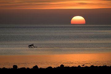 Glücklicher Hund als Silhouette läuft im Sonnenuntergang über das Wattenmeer der Nordsee in Deutschl von Maren Winter