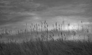 Duinriet in de mist van Martine Moens