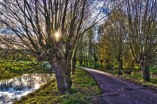 Rotterdams polderlandschap met knotwilgen
