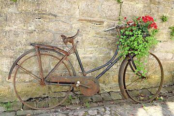 Oude verroeste fiets met een plant in de fietsmand van Nicolette Vermeulen