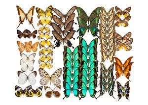 Collectie Vlinders van Marielle Leenders