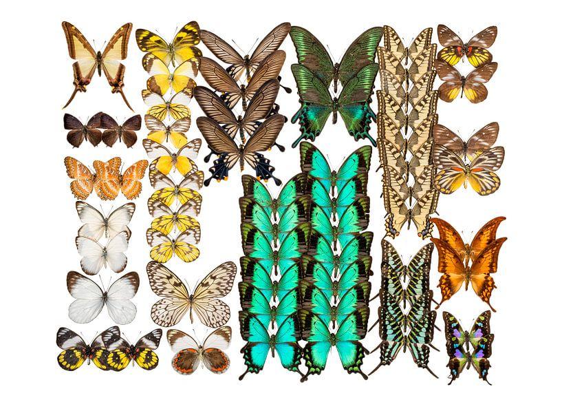 Collection de papillons sur Marielle Leenders