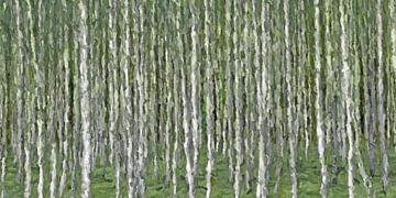 Birch forest abstract van Marion Tenbergen