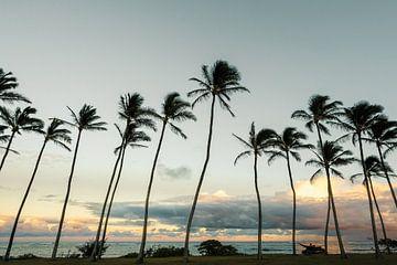 Kauai Palmen van road to aloha
