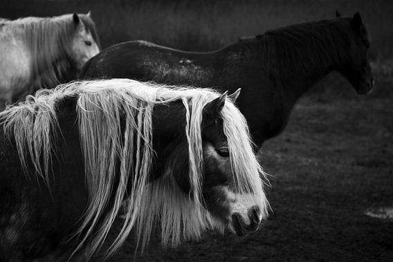 Three horses II van Luis Fernando Valdés Villarreal Boullosa
