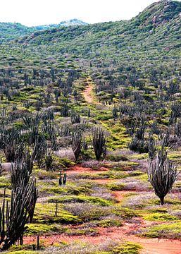 Een cactus in een veld van Homemade Photos