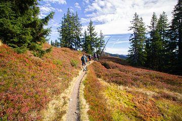 Wandelaars in Oostenrijkse bergen in de herfst met mooie kleurrijke heide van Marco Leeggangers