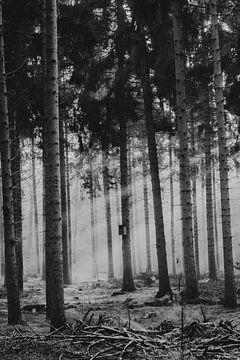 Sonnenstrahlen durch den Wald bei Junne von Holly Klein Oonk