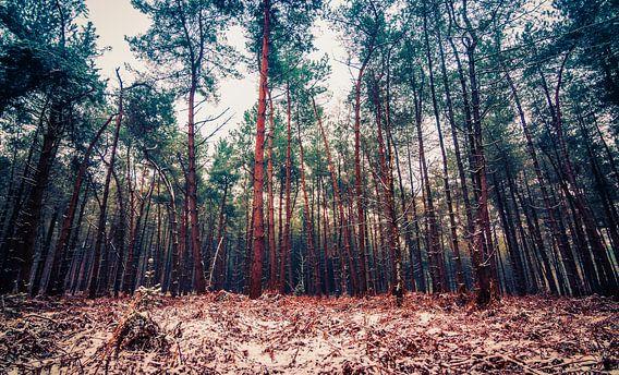 winter in het bos van Ilya Korzelius