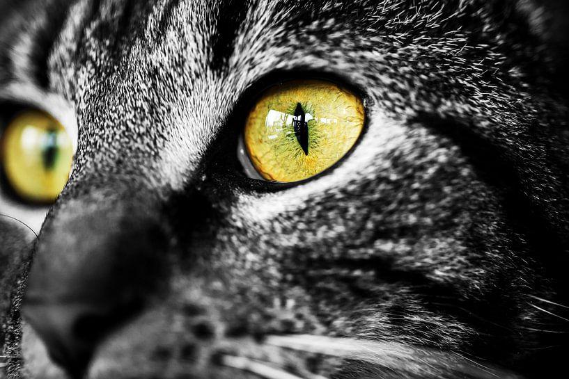 Kattenogen van Jelte Bosma