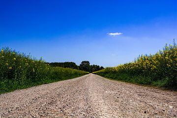 De steenachtige weg naar huis van Michael Nägele