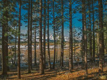 Tahoe Trees sur Bas Koster