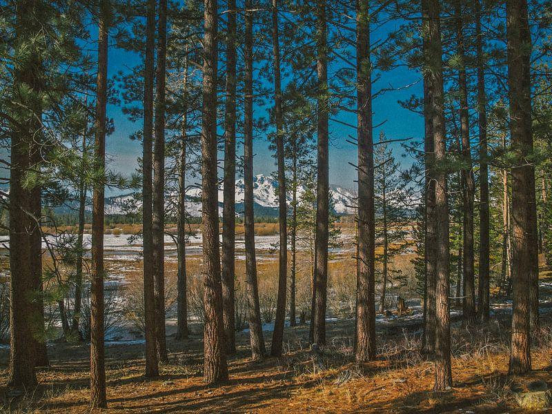 Tahoe Trees van Bas Koster