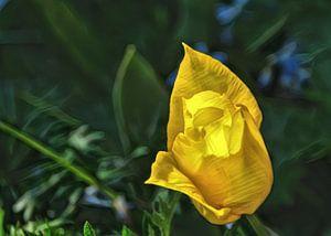 Eine sonnige Tulpe.