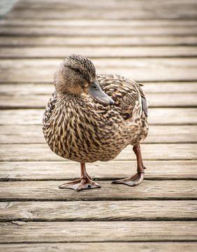 Ente von Kashja Neels