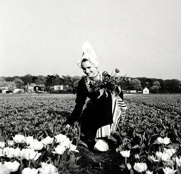 Boerenmeisje in tulpenveld van Hollandse Hoogte