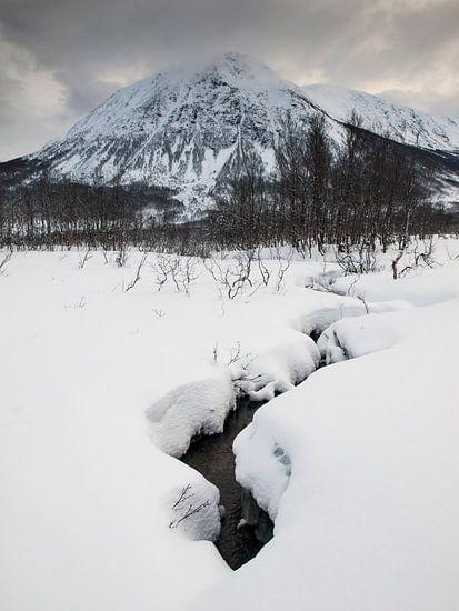 Mountain Stream van David Hanlon