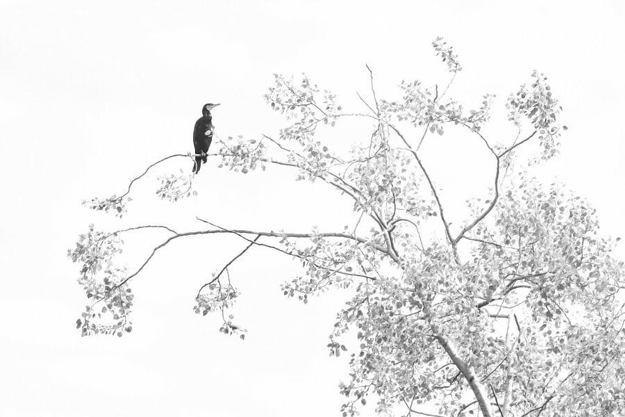 Aalscholver in zwart/wit uitvoering.