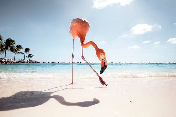 Flamingo Friday van Claire Droppert