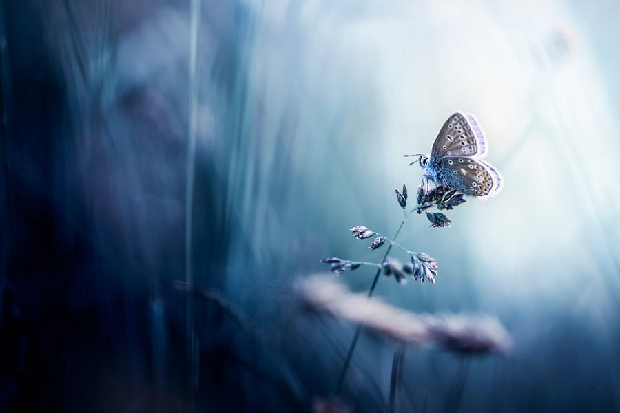 To a Butterfly van Bob Daalder