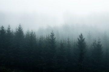 Mistig bos van Joris Machholz