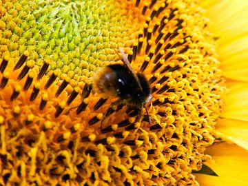 Gele zonnebloem van Jellie van Althuis