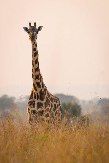 Giraffe langs de Nijl