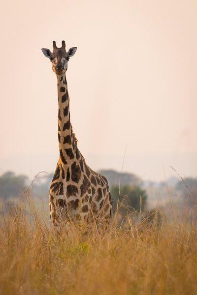 Giraffe langs de Nijl van Dennis Van Den Elzen