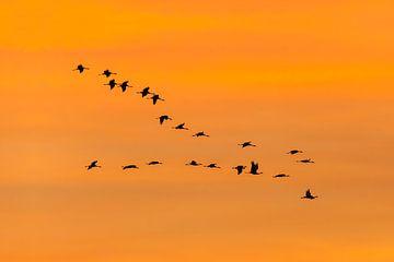 Kraanvogels in oranje lucht van Karla Leeftink