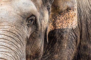 olifant von joey migchels