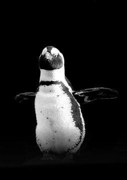 Pinguin von Guido Heijnen