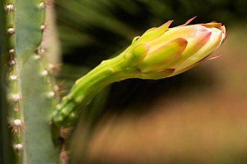 Cactus bloem van Maren Oude Essink