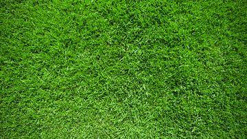 Groene grasmatten van Günter Albers