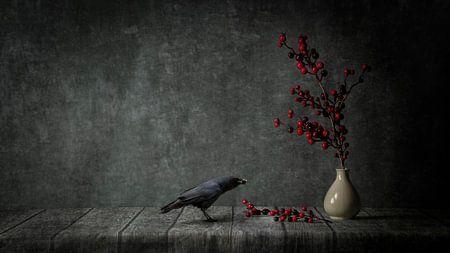 Zwarte kraai met rode bes van Cindy Dominika
