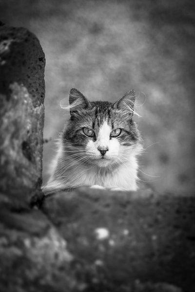 kat van Edwin Hunter