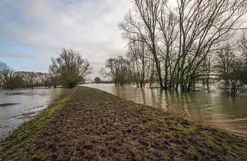 Ondergelopen uiterwaarden van een Nederlandse rivier van Ruud Morijn