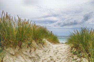 Naar het strand van Mark Bolijn