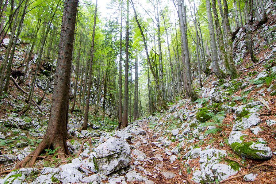 Hoge frisgroene bomen en rotsen