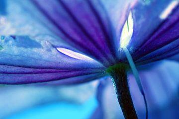 Pétales de lys bleus von Christine GUILLET
