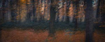 Herfstbos avondgloren  sur Chantal van Dooren