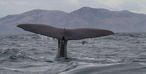 Walvis Nieuw Zeeland