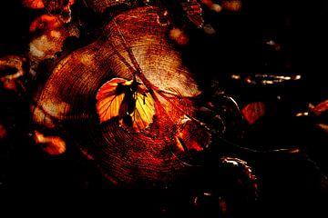 Spring leaves van Abra van Vossen