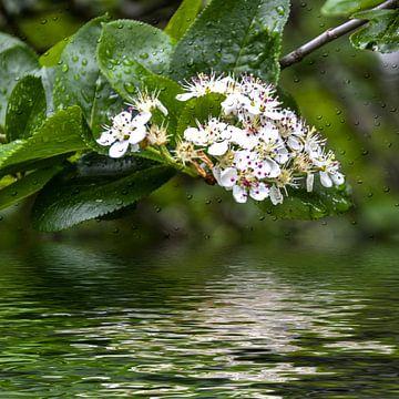 witte bloemen van Christine Nöhmeier