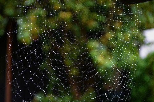 Webdesign door de spin