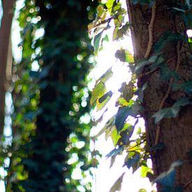 Close-up van bomen met zonlicht van André van Bel