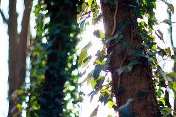 Close-up van bomen met zonlicht von André van Bel